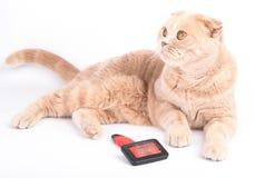 Να βρεθεί γάτα και κτένισμα της βούρτσας στο άσπρο υπόβαθρο Στοκ Εικόνα