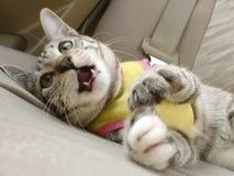 Να βρεθεί γάτα Στοκ Εικόνες