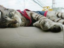 Να βρεθεί γάτα Στοκ Εικόνα
