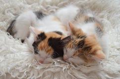 Να βρεθεί γατάκι ύπνου Στοκ φωτογραφία με δικαίωμα ελεύθερης χρήσης