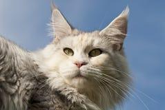 να βρεθεί γατών Στοκ Εικόνα
