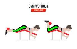 Να βρεθεί μπούκλες ποδιών athletic exercises Ασκήσεις σε μια γυμναστική Απεικόνιση ενός ενεργού τρόπου ζωής διάνυσμα Στοκ Εικόνα