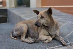να βρεθεί πατωμάτων σκυλ&iot Στοκ Εικόνα