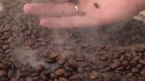 Να βρεθεί σε μια ευώδη ελαφριά ομίχλη των φασολιών καφέ μαζεύει με τη τσουγκράνα στο χέρι έπειτα αργά κοσκινίζει κάτω απόθεμα βίντεο