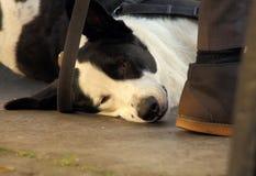 Να βρεθεί σκυλί στα κύρια πόδια Στοκ φωτογραφία με δικαίωμα ελεύθερης χρήσης
