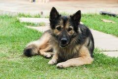 Να βρεθεί σκυλιών Στοκ Εικόνα