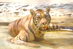 να βρεθεί τίγρη Στοκ φωτογραφία με δικαίωμα ελεύθερης χρήσης