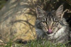 να βρεθεί gras γατών Στοκ εικόνα με δικαίωμα ελεύθερης χρήσης