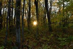 Να διαπερνήσει ήλιων στα δέντρα Στοκ Φωτογραφίες
