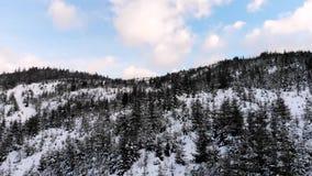 να είστε απολύτως ευτυχής ακούει το ι εάν τα βουνά εικόνας ευχαριστούν χρησιμοποιημένος όπου ο χειμώνας εσείς Χειμερινό δάσος από απόθεμα βίντεο