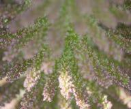 να είστε μπορεί διαφορετική floral σύσταση σκοπών απεικόνισης χρησιμοποιούμενη Στοκ Εικόνες