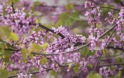 να είστε μπορεί διαφορετική floral σύσταση σκοπών απεικόνισης χρησιμοποιούμενη Στοκ εικόνα με δικαίωμα ελεύθερης χρήσης