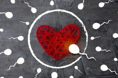 Να είστε ο πρώτος πάντα και παντού Σπερματοζωάριο για να στοχεύσει για ένα αυγό υπό μορφή καρδιάς Στοκ Εικόνα