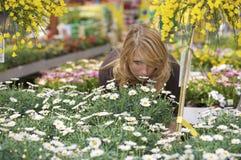 να ελέγξει έξω τα φυτά Στοκ Εικόνες