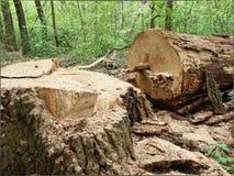 Να εξαγάγει στο δάσος Στοκ Εικόνα