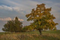 Να εξισώσει με το δέντρο στο εθνικό πάρκο Slavkovsky les Στοκ Φωτογραφίες