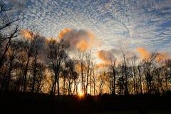 Να εξισώσει στο δάσος Στοκ Εικόνες