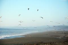 Να εξισώσει στο Ειρηνικό Ωκεανό Στοκ Φωτογραφίες