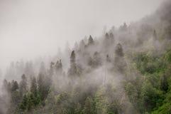 Να εξισώσει της Misty Στοκ φωτογραφίες με δικαίωμα ελεύθερης χρήσης