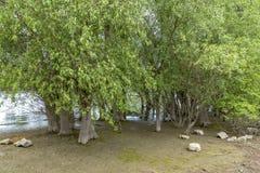 Να επαναληφθεί νερό που ξεχειλίζει την άγρια ζώνη προστασίας φύσης του Ρ Στοκ Εικόνα