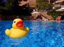 Να επιπλεύσει πάπια στην πισίνα Στοκ Φωτογραφία