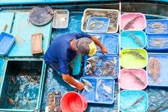 Να επιπλεύσει αγορά θαλασσινών σε Sai Kung, Χονγκ Κονγκ Στοκ φωτογραφίες με δικαίωμα ελεύθερης χρήσης