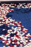 Να επιπλεύσει τριαντάφυλλων Στοκ φωτογραφίες με δικαίωμα ελεύθερης χρήσης