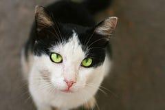Να ικετεύσει τη γάτα Στοκ φωτογραφία με δικαίωμα ελεύθερης χρήσης