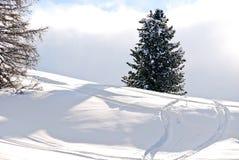Να κάνει σκι διαδρομές γύρω από το δέντρο έλατου στους δολομίτες, Ιταλία Στοκ φωτογραφίες με δικαίωμα ελεύθερης χρήσης