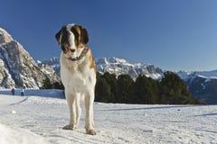 Να κάνει σκι μέσω των δολομιτών και του SAN Bernardo Στοκ Εικόνα