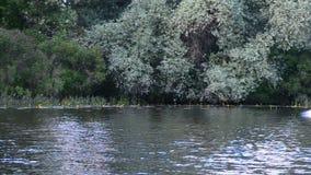 Να κάνει σκι νερού απόθεμα βίντεο