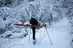 Να κάνει σκι στα ξύλα στοκ εικόνες