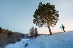 Να κάνει σκι στο δάσος Στοκ Εικόνα