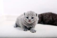Να καταπλήξει πρόσφατα το γεννημένο γατάκι Στοκ φωτογραφίες με δικαίωμα ελεύθερης χρήσης