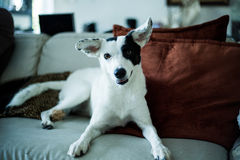 να κοιτάξει επίμονα σκυλ Στοκ φωτογραφίες με δικαίωμα ελεύθερης χρήσης