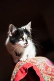 Να κρυφτεί τη γραπτή γάτα στοκ φωτογραφία με δικαίωμα ελεύθερης χρήσης