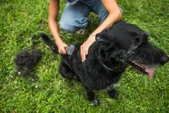 Να κτενίσει έξω τη γούνα ενός σκυλιού στοκ εικόνα με δικαίωμα ελεύθερης χρήσης