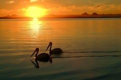 Να κωπηλατήσει μακριά στο ηλιοβασίλεμα Στοκ Εικόνες