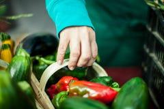 Να μαζεψει με το χέρι επάνω ένα κόκκινο και πράσινο καλάθι πιπεριών στοκ φωτογραφίες