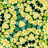 να μοιάσει με mandala καλειδο Στοκ Εικόνες