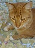 Να ονειρευτεί τη γάτα Στοκ φωτογραφία με δικαίωμα ελεύθερης χρήσης