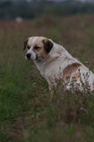 Να ονειρευτεί το σκυλί αλητών που κοιτάζει στο αριστερό Στοκ φωτογραφίες με δικαίωμα ελεύθερης χρήσης