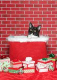 Να οξύνει γατών σμόκιν από ένα καλάθι Χριστουγέννων που περιβάλλεται κοντά παρουσιάζει στοκ εικόνα με δικαίωμα ελεύθερης χρήσης