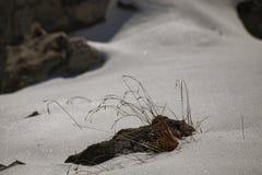 Να οξύνει χλόης από το χιόνι στοκ εικόνα με δικαίωμα ελεύθερης χρήσης