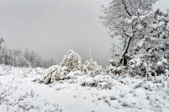 Να πάρει έναν κρύο χειμώνα Στοκ φωτογραφία με δικαίωμα ελεύθερης χρήσης