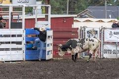 Να πάρει μακρυά από τον ταύρο Στοκ Φωτογραφίες