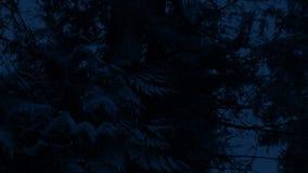 Να περάσει κάτω από τα μεγάλα δασικά δέντρα τη νύχτα φιλμ μικρού μήκους