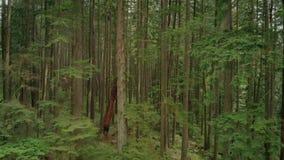 Να πετάξει επάνω μετά από τα δασικά δέντρα απόθεμα βίντεο