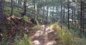 Να πετάξει χαμηλά μέσω του μυστικού δασικού δάσους έννοιας φρίκης πρωινού μέσα Η νεράιδα στο άγριο δάσος και πετά απόθεμα βίντεο