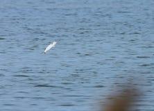 να πηδήξει έξω ψαριών ύδωρ στοκ φωτογραφία